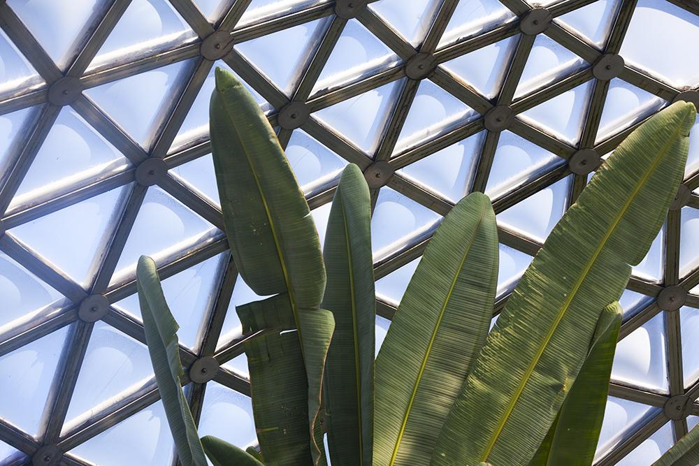 botanicgardens-0474web.jpg