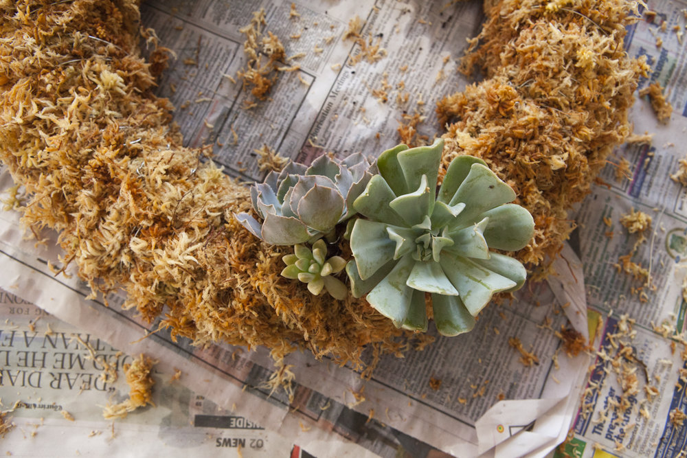 succulent-wreath-diy-8