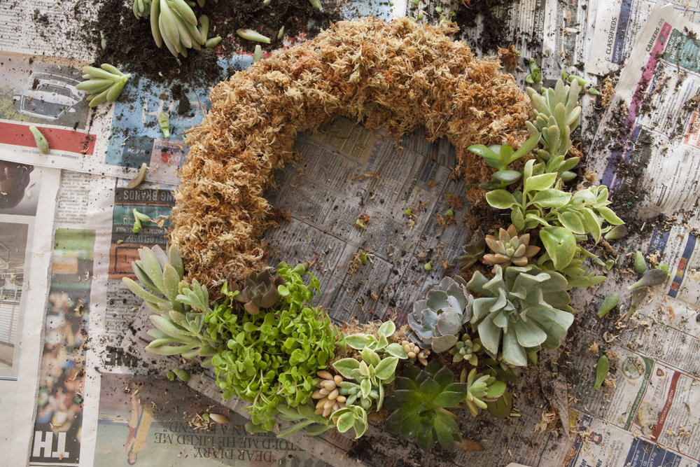 succulen-wreath-diy-9