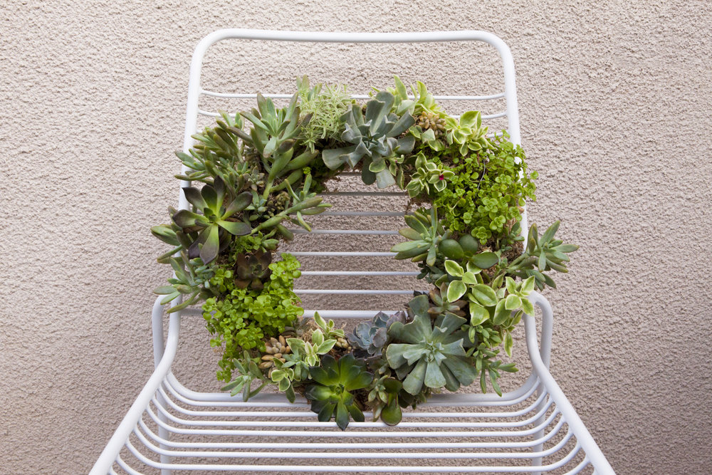 succulent-wreath-diy12