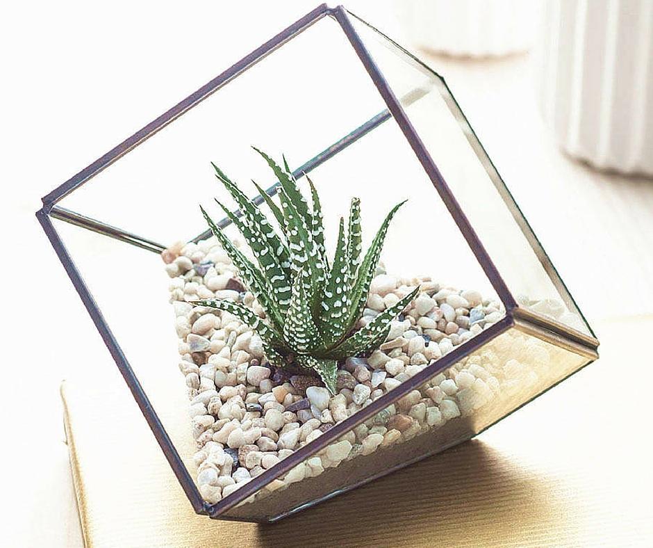 Szkladny planter/terrarium:  notonthehighstreet.com