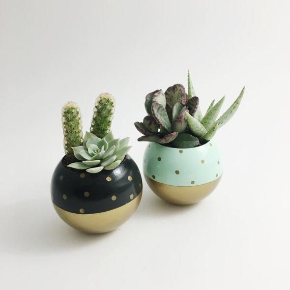 osłonki - gold dot pod planter