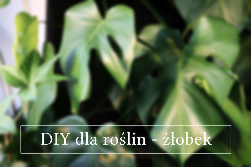 DIY dla roślin - żłobek.jpg