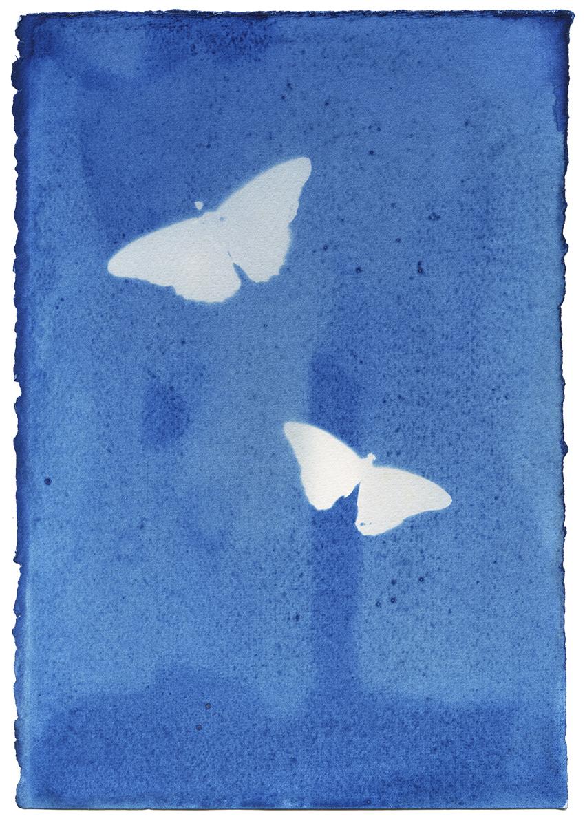 Butterflies_1_contrast_sm.jpg