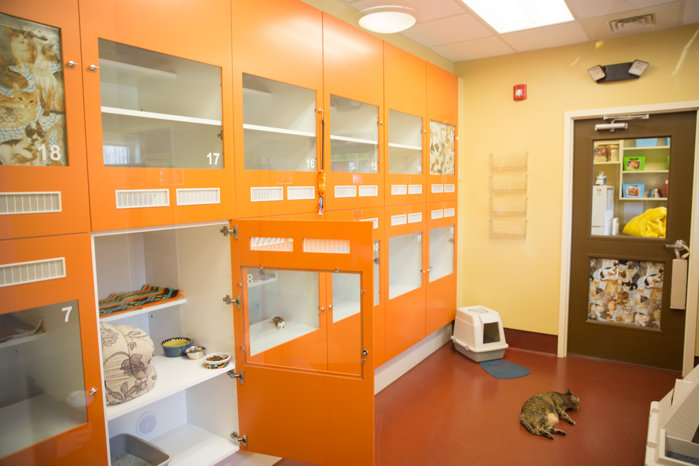 Inside HART for Animals - Kitty Condos