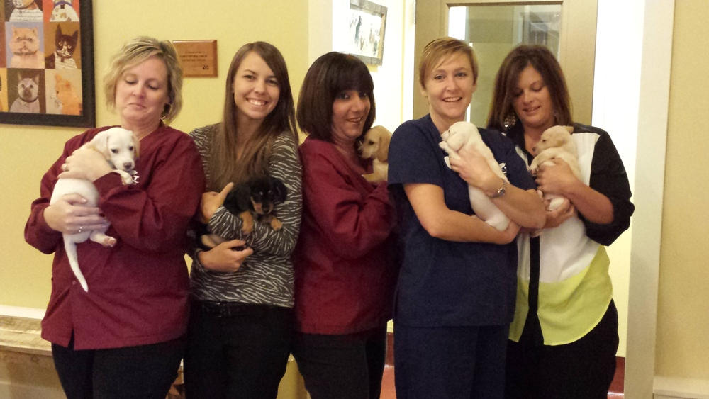 Job Benefits! HART staff holding a litter of puppies.