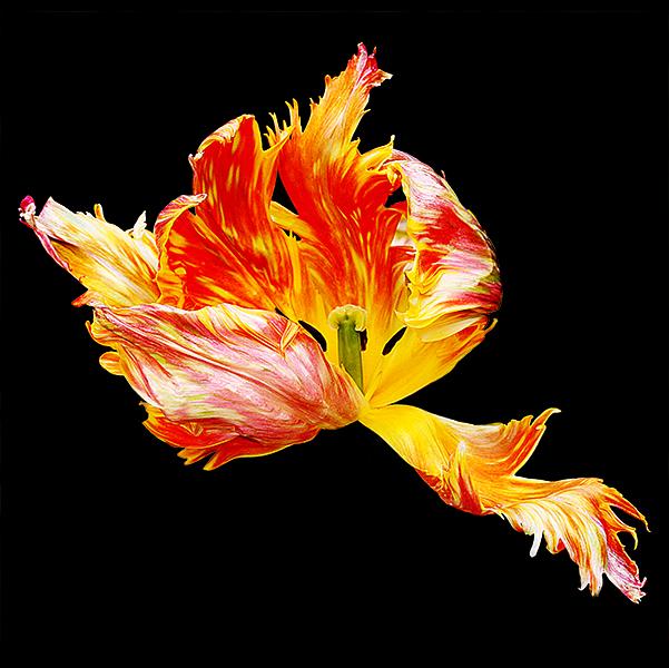 Flaming Sambuka