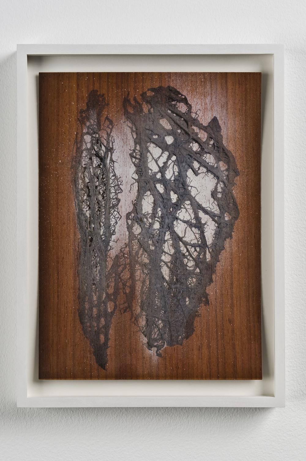 Luca Trevisani, Perscrutamini naturas rerum B, 2011. Stampa UV su legno di ciliegio, 29,7 x 21 cm  (Courtesy Galleria Mehdi Chouakri, Berlino)
