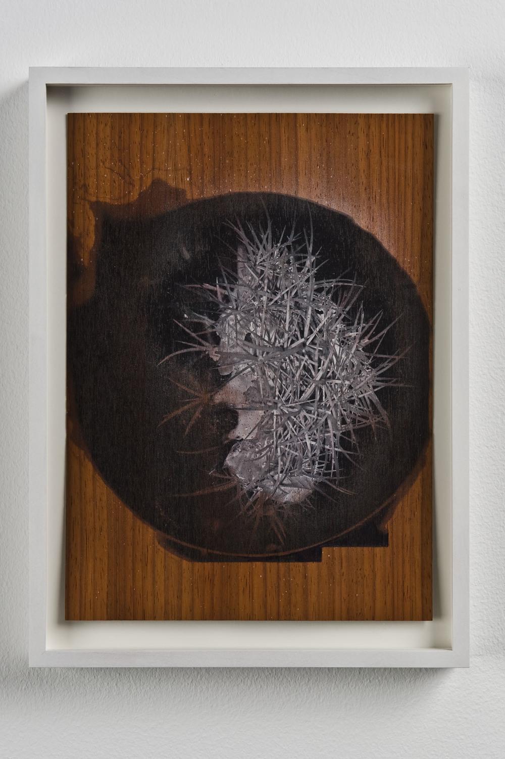 Luca Trevisani, Perscrutamini naturas rerum C, 2011. Stampa UV su legno di ciliegio, 29,7 x 21 cm  (Courtesy Galleria Mehdi Chouakri, Berlino)