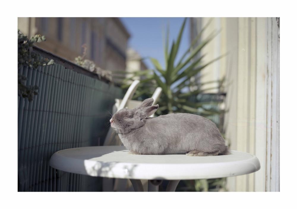 Conejo al sol.