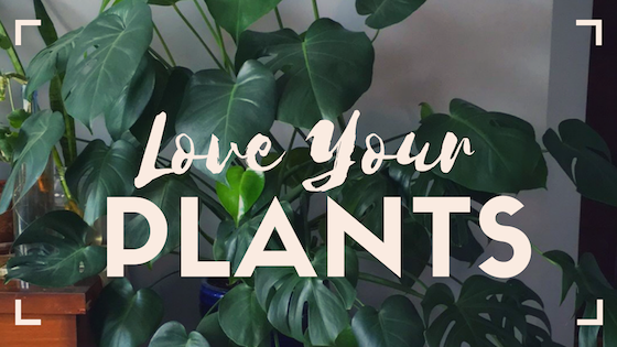 How to Love Your Plants