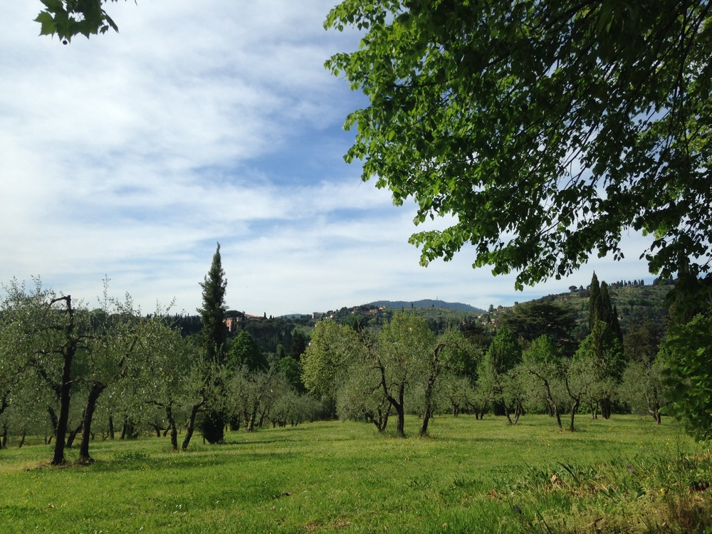 The beautiful (2 hour!) walk back. Long, but worth it for those olive groves...