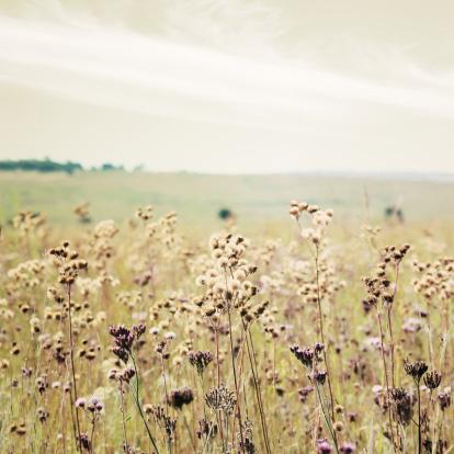 flower field 1.jpg