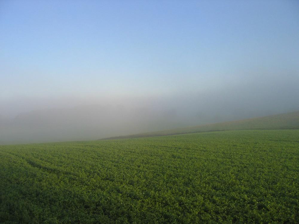 EARLY MORNING FARM FIELDS