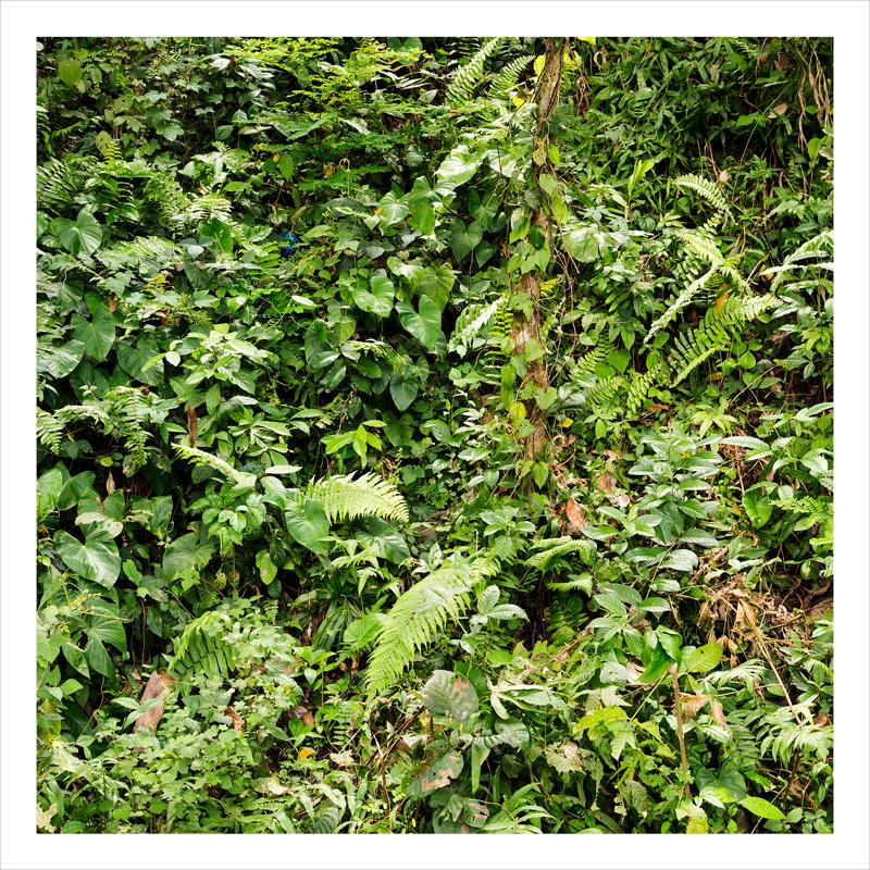 jungle, Bali