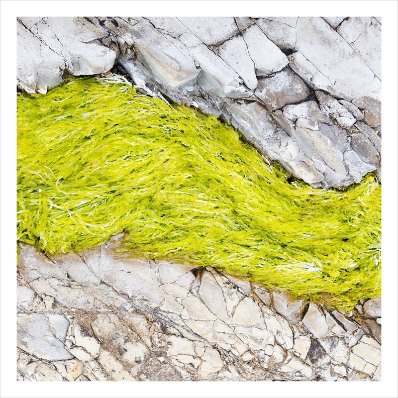 seaweed and stone, California coast