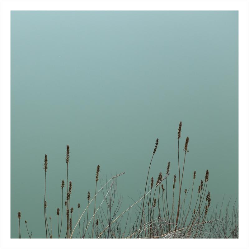 river and grass, Sacramento delta