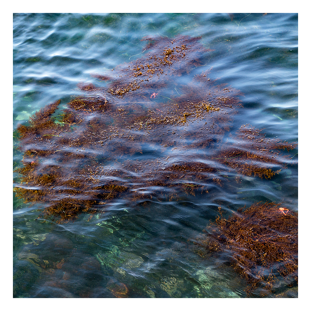 Kelp Waves