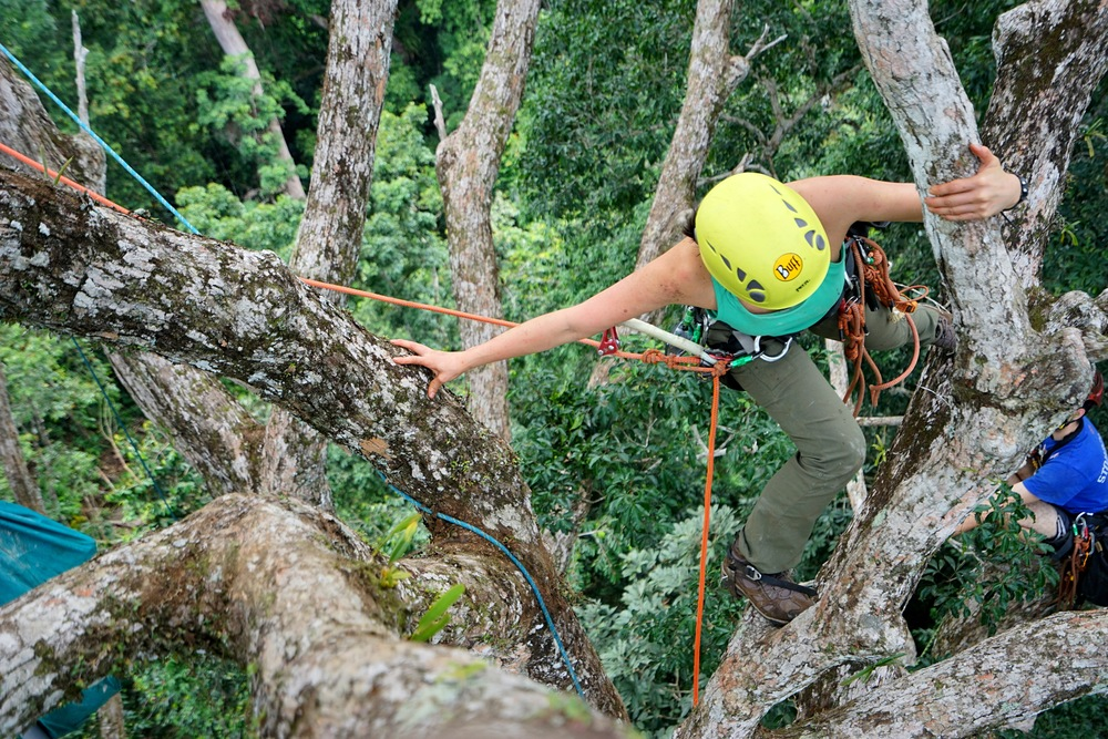 Tree Climber Training in West Africa