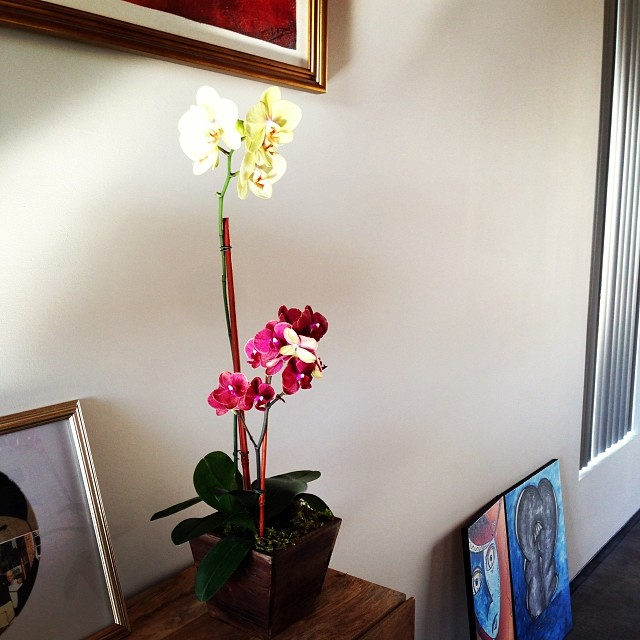 Today's feel good moment Our Orchid in full bloom #greenthumb (at homeiswheretheheartis)
