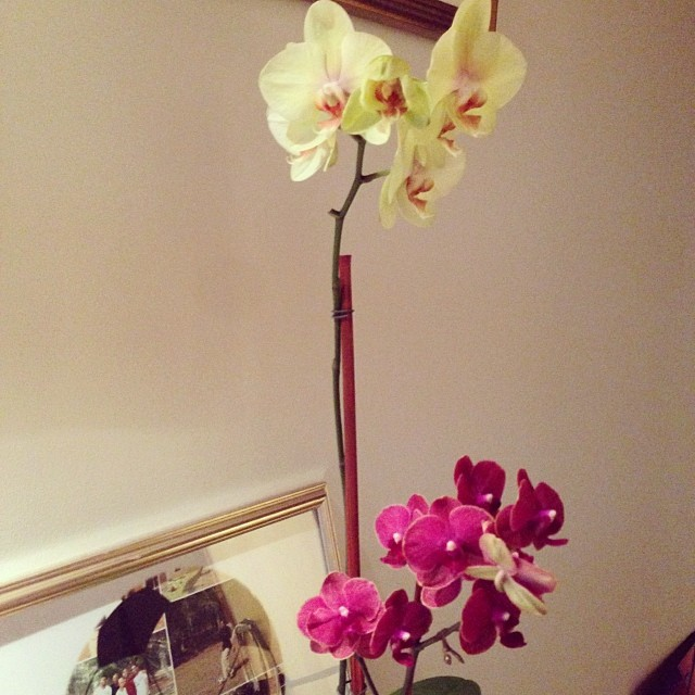 The last bud has bloomed yeah!!!!! #greenthumb #orchid (at homeiswheretheheartis)