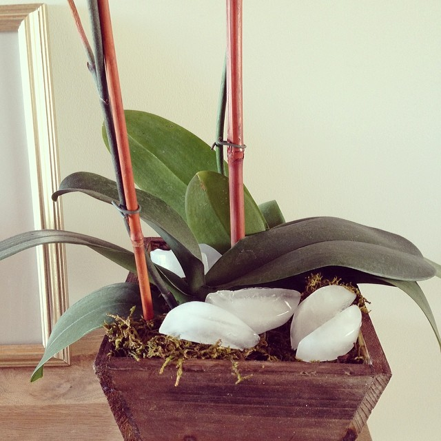 Cooling down. #orchid #greenthumb