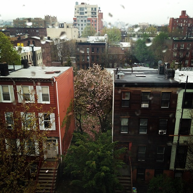 Hello Brooklyn How You Doin #Brooklyngirl #cherryblossom