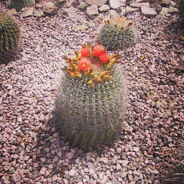Dangerous Beauty #desert