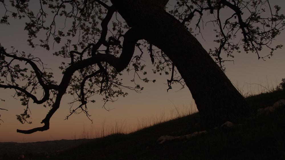 TreeTrunkStillFrame_v1.jpg