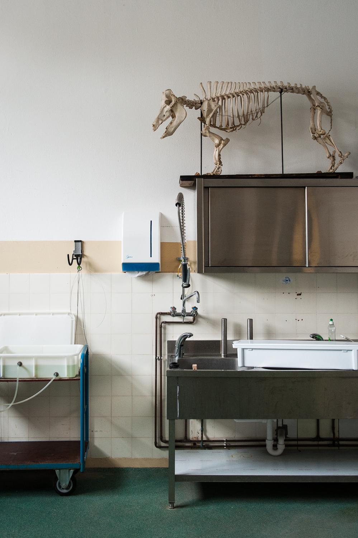 201303 Goat Hospital 13.jpg
