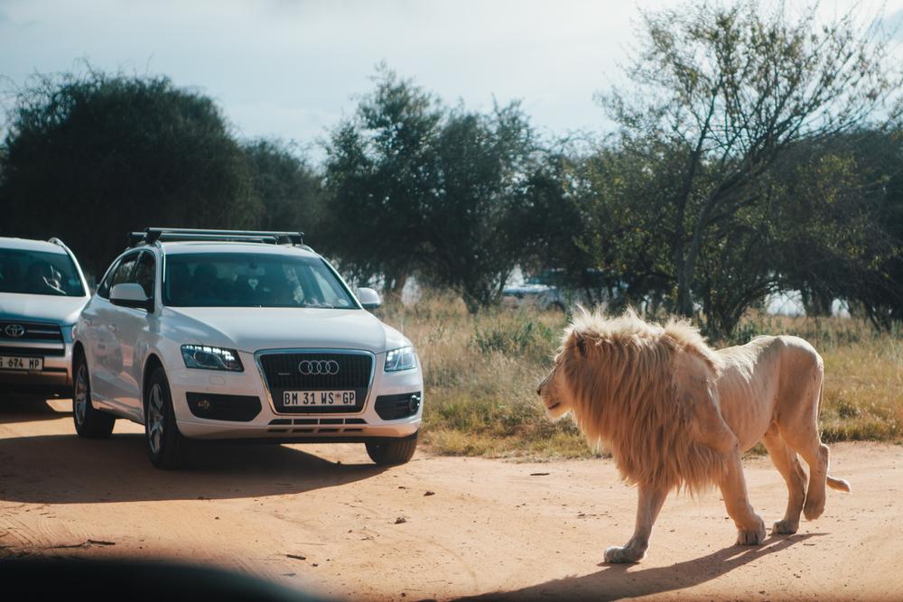 South_Africa_8334.jpg