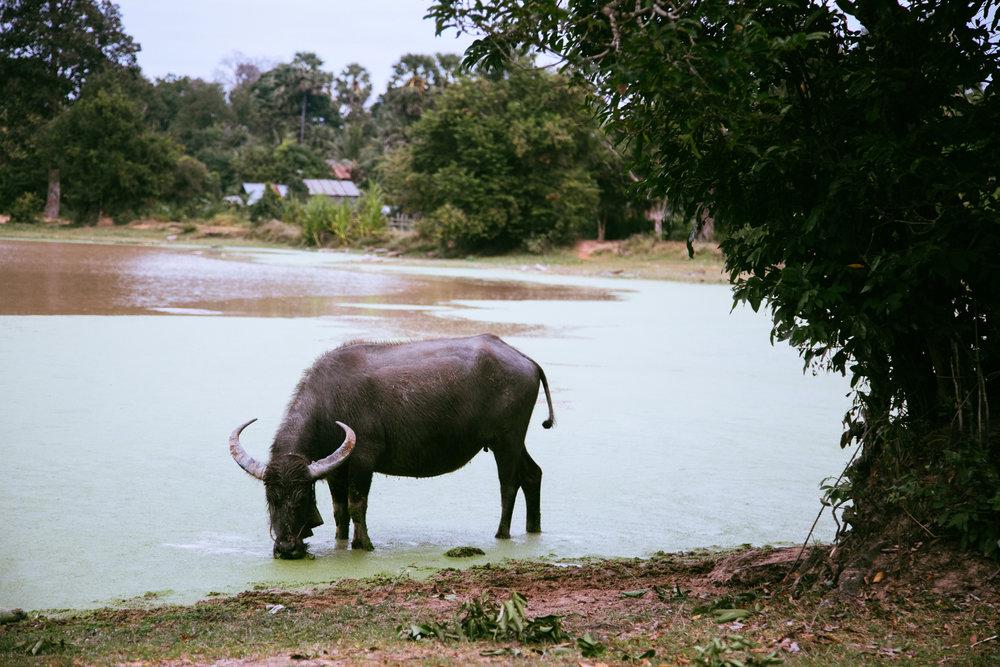 Cambodia039.jpg