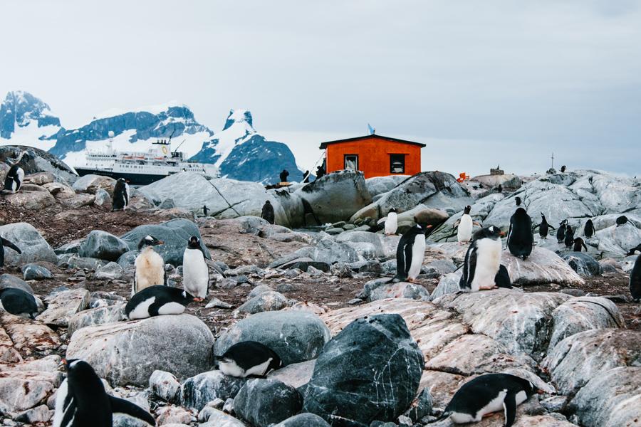 antarctica052.jpg