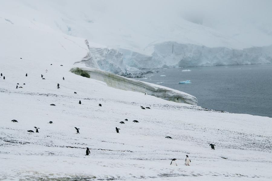 antarctica075.jpg