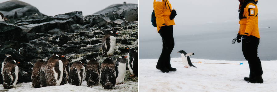 antarctica076.jpg