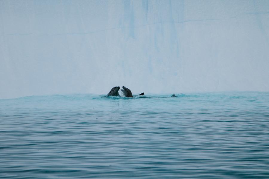antarctica084.jpg