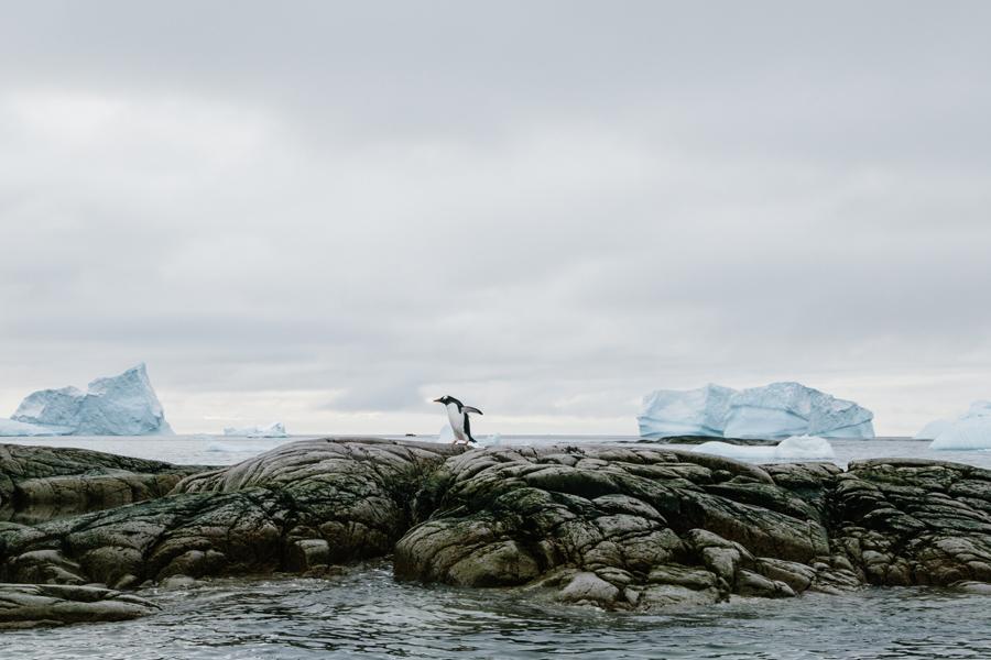 antarctica115.jpg