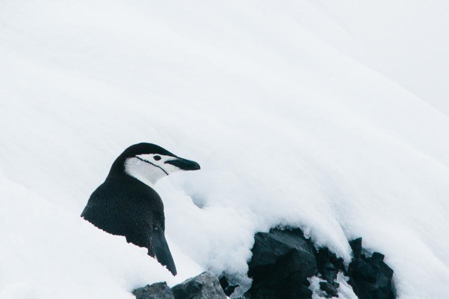 antarctica119.jpg