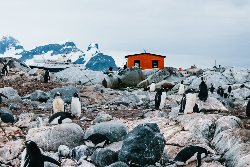 Antarctica-74.jpg