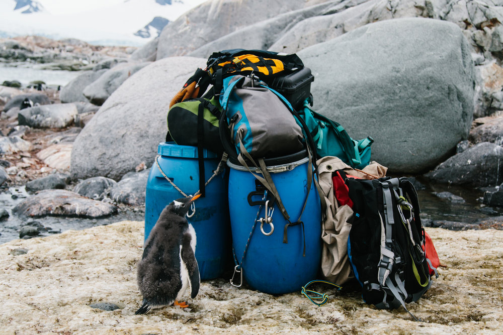 Antarctica-76.jpg