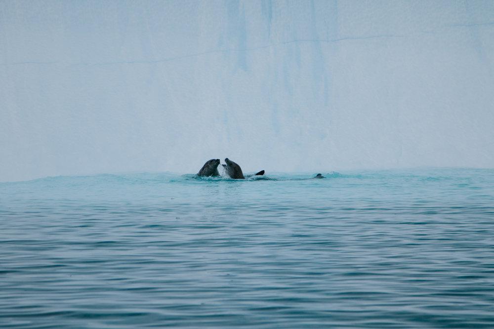 Antarctica-111.jpg