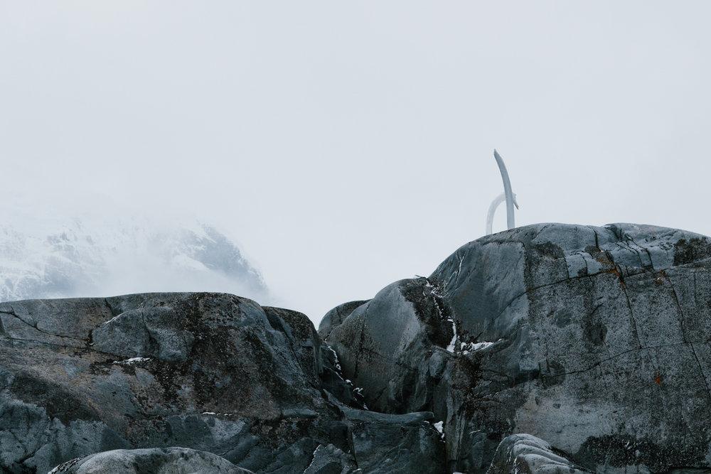 Antarctica-134.jpg