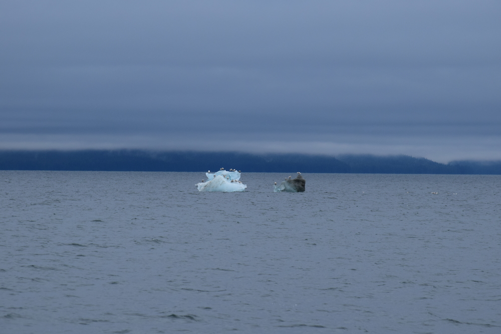 Then the Icebergs and bergie bits started to appear in the water.  These are birds hitching a ride...