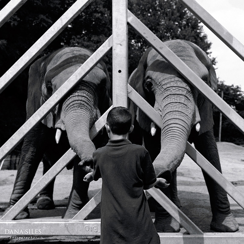 Boy and elephants
