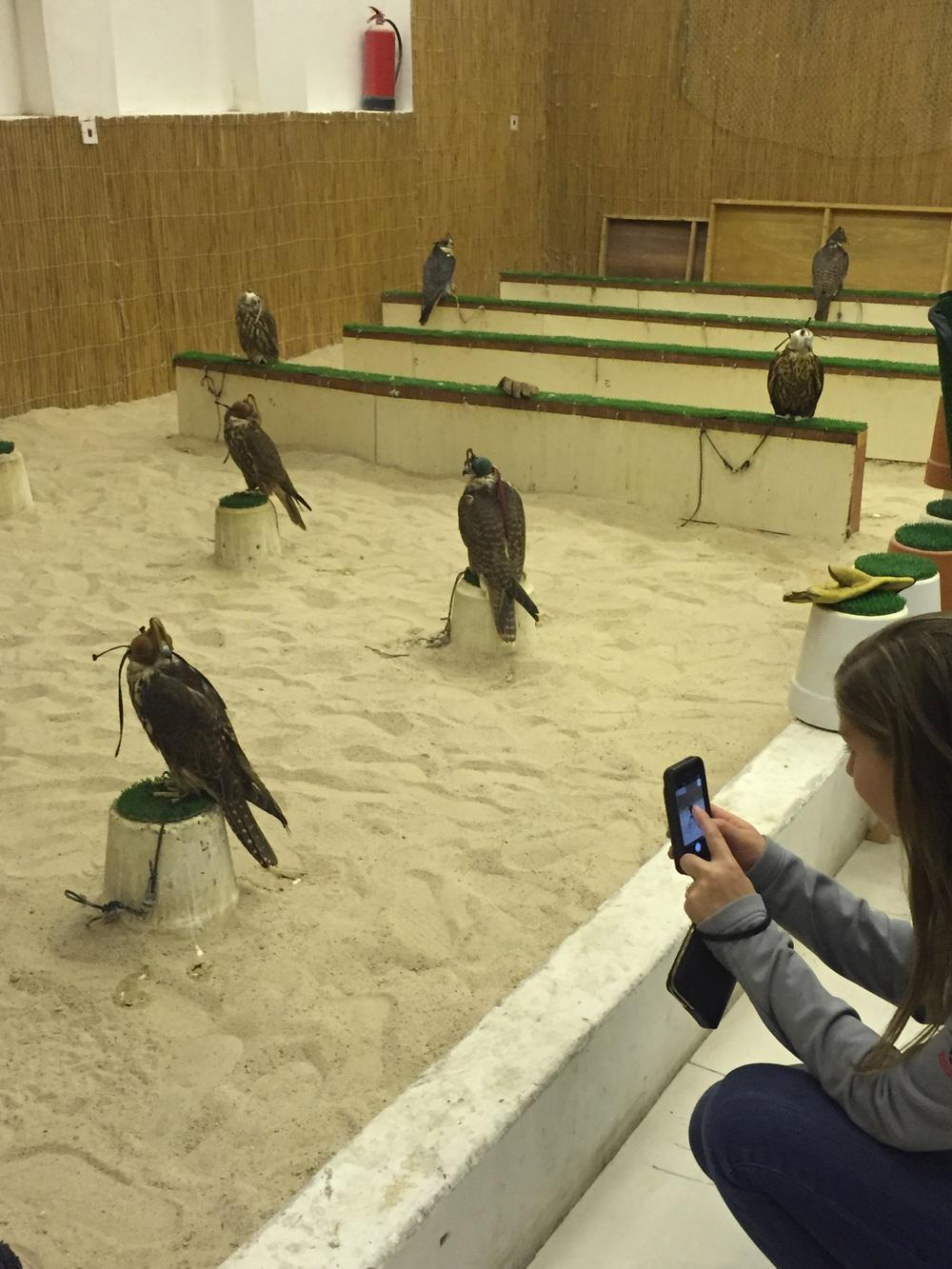 Falcons!!!