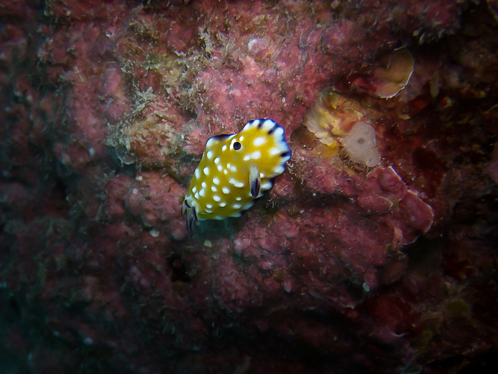 Trembling Nudibranch_20131013.jpg