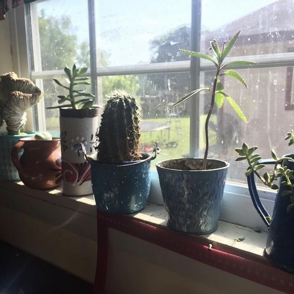 Plantita Lyfe