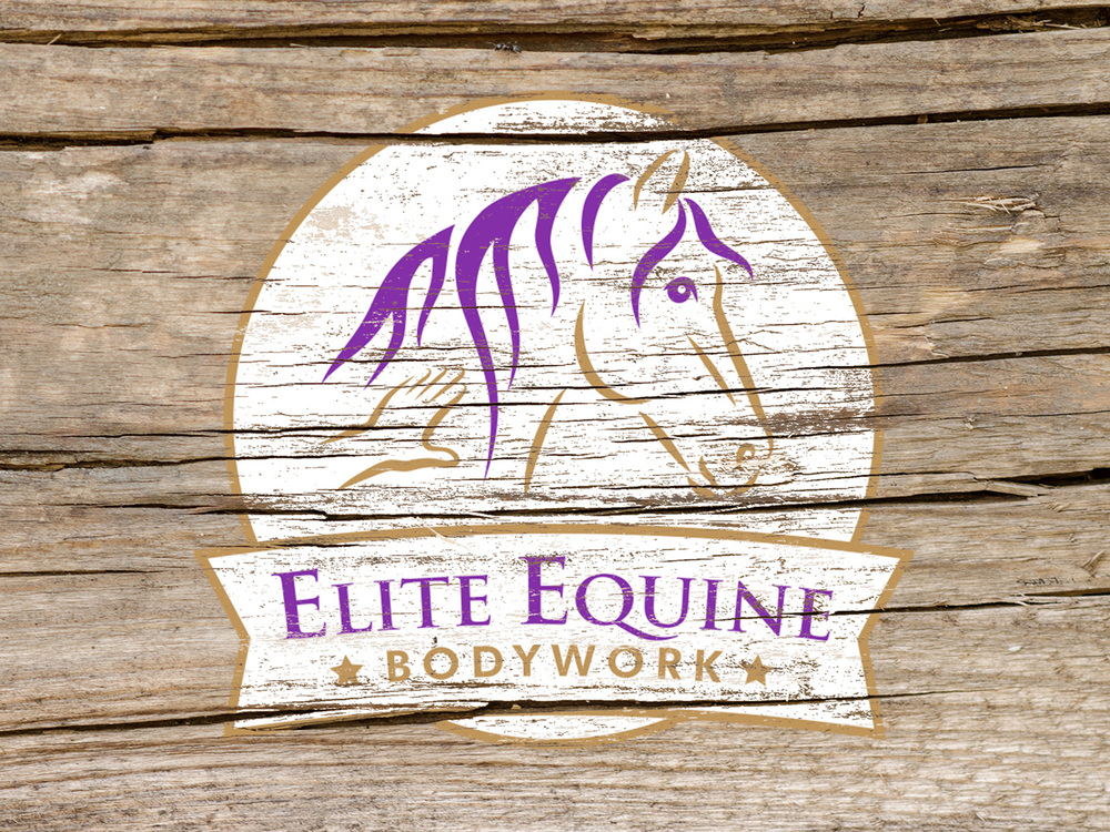 ELITE EQUINE BODYWORK - Branding and collaterals.