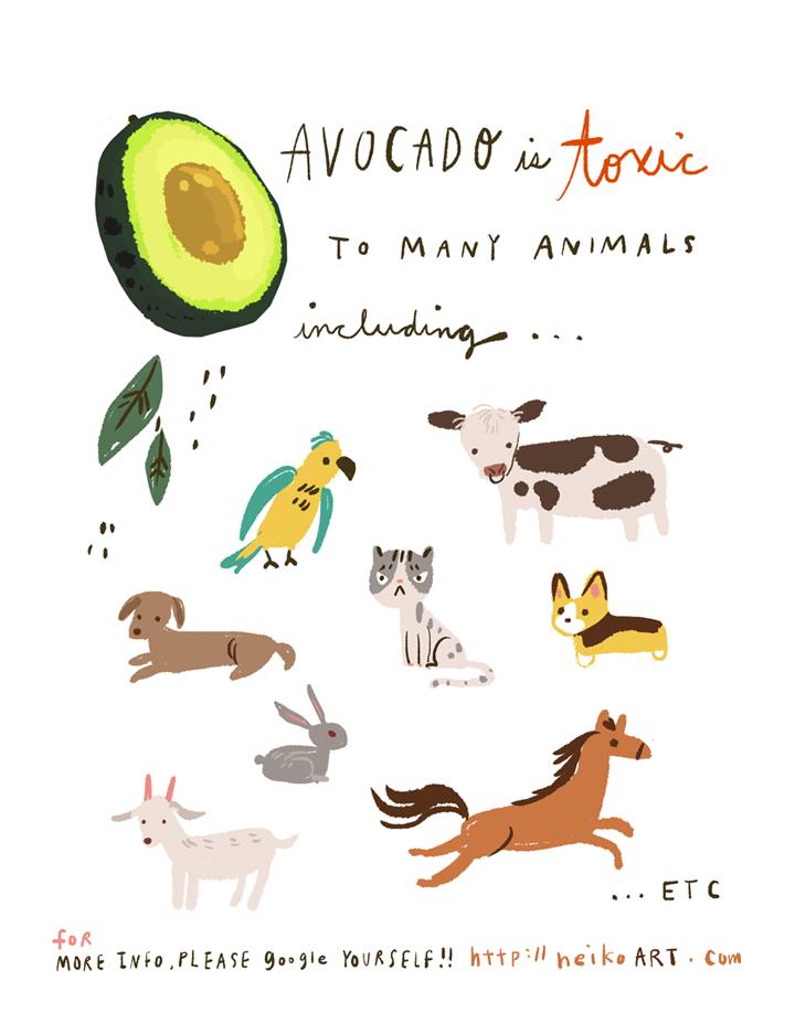 avocado_neikong.jpg