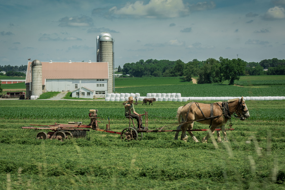 Amish farmers were working everywhere, Southeastern PA